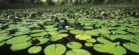 Laguna de Olandina. Olandinako urmaela.DFA