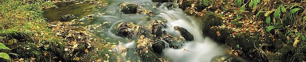 Río del Molino. Molinoko Ibaia. DFA