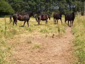 villafria-caballos-01